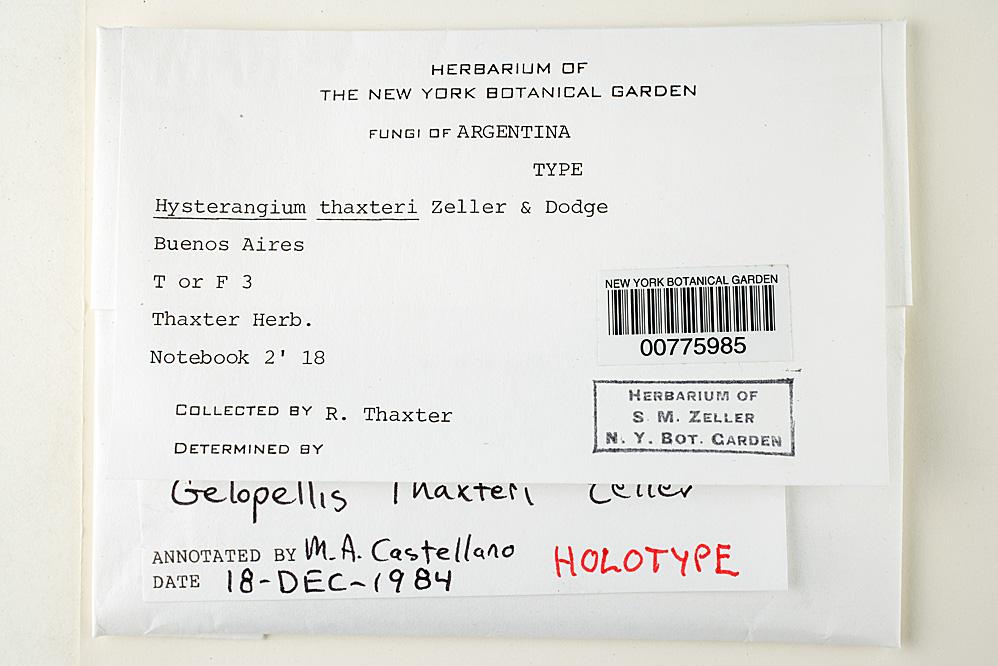 Hysterangium thaxteri image