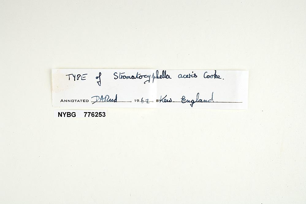 Stromatocyphella aceris image