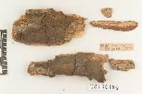 Fomitiporia lloydii image