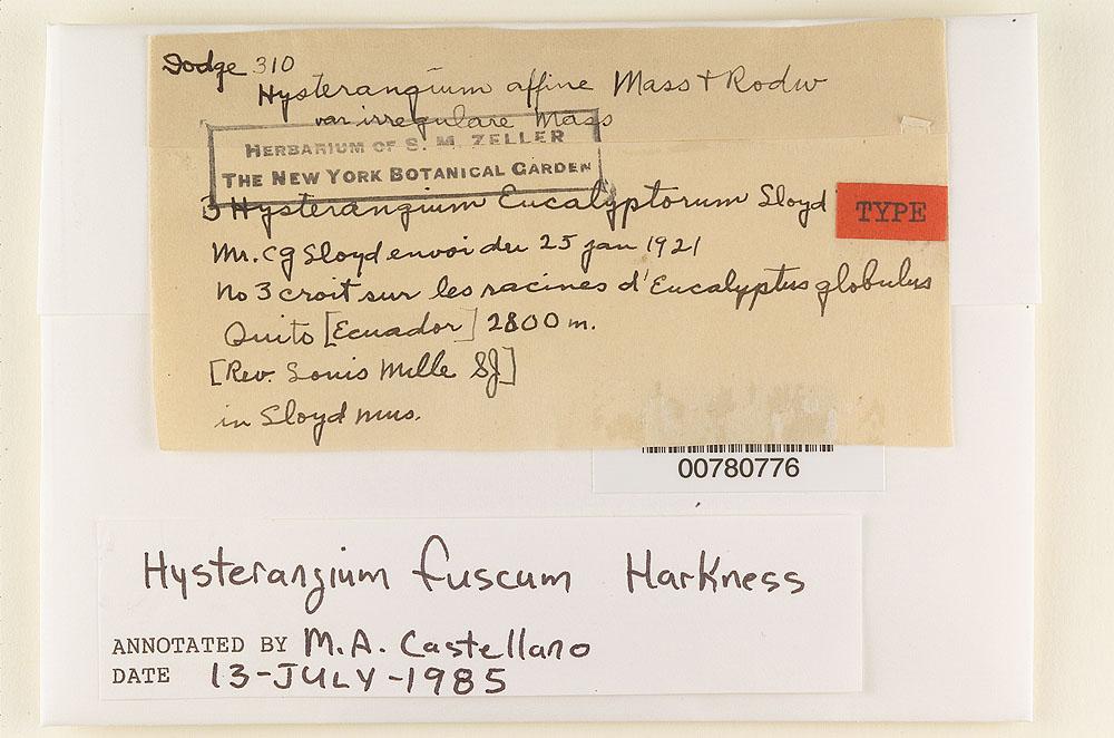 Hysterangium eucalyptorum image