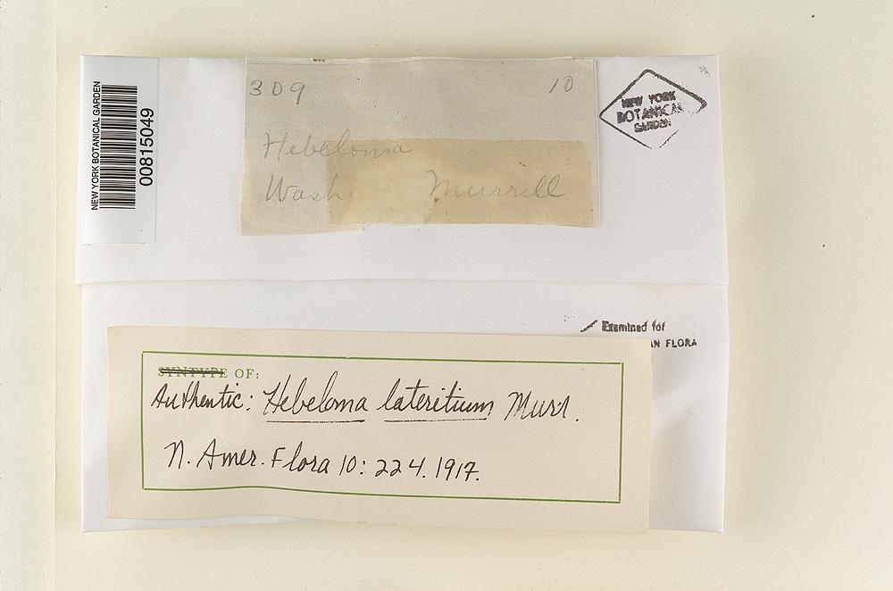 Hebeloma lateritium image