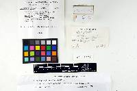 Leptonia fabaceola image