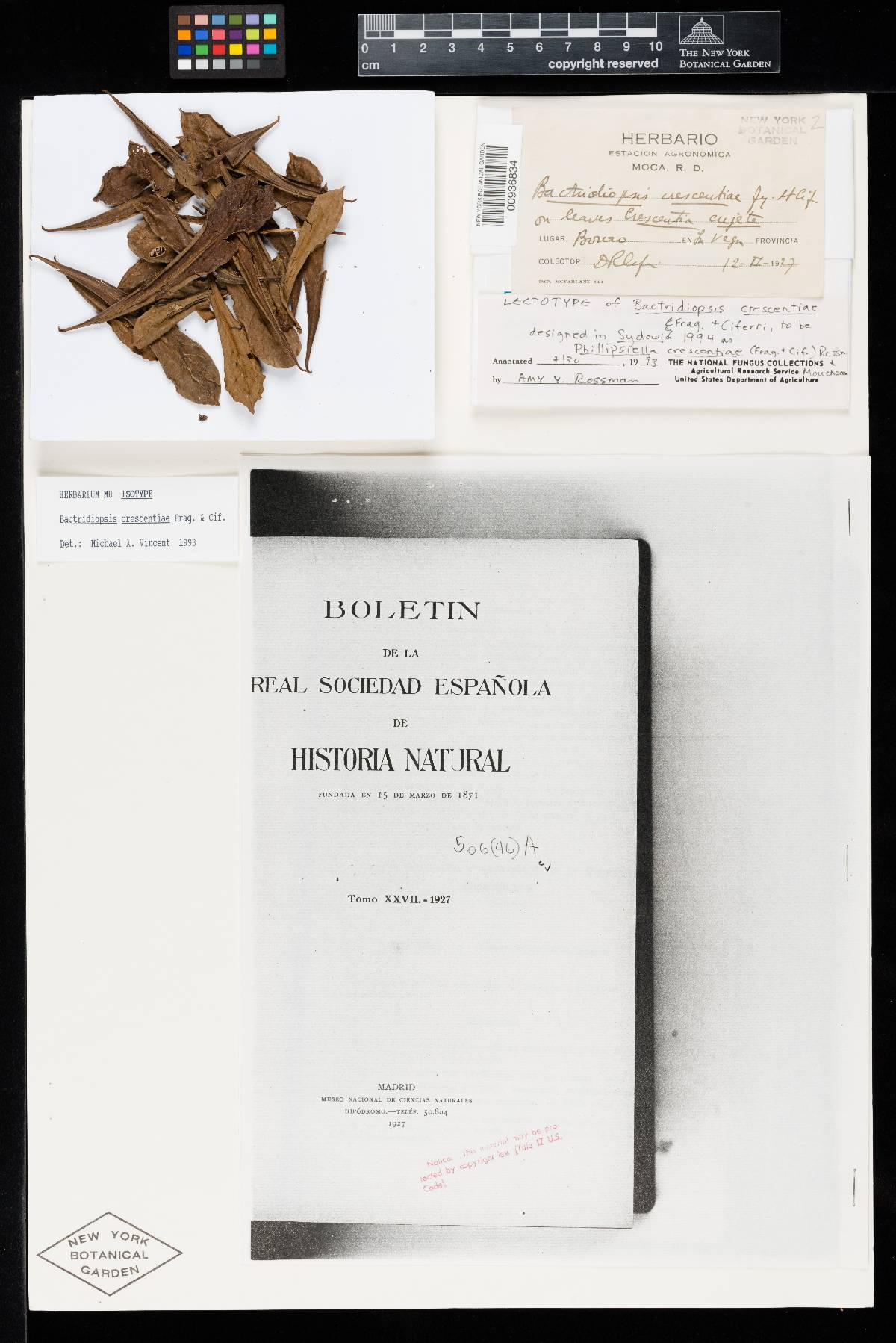 Bactridiopsis crescentiae image