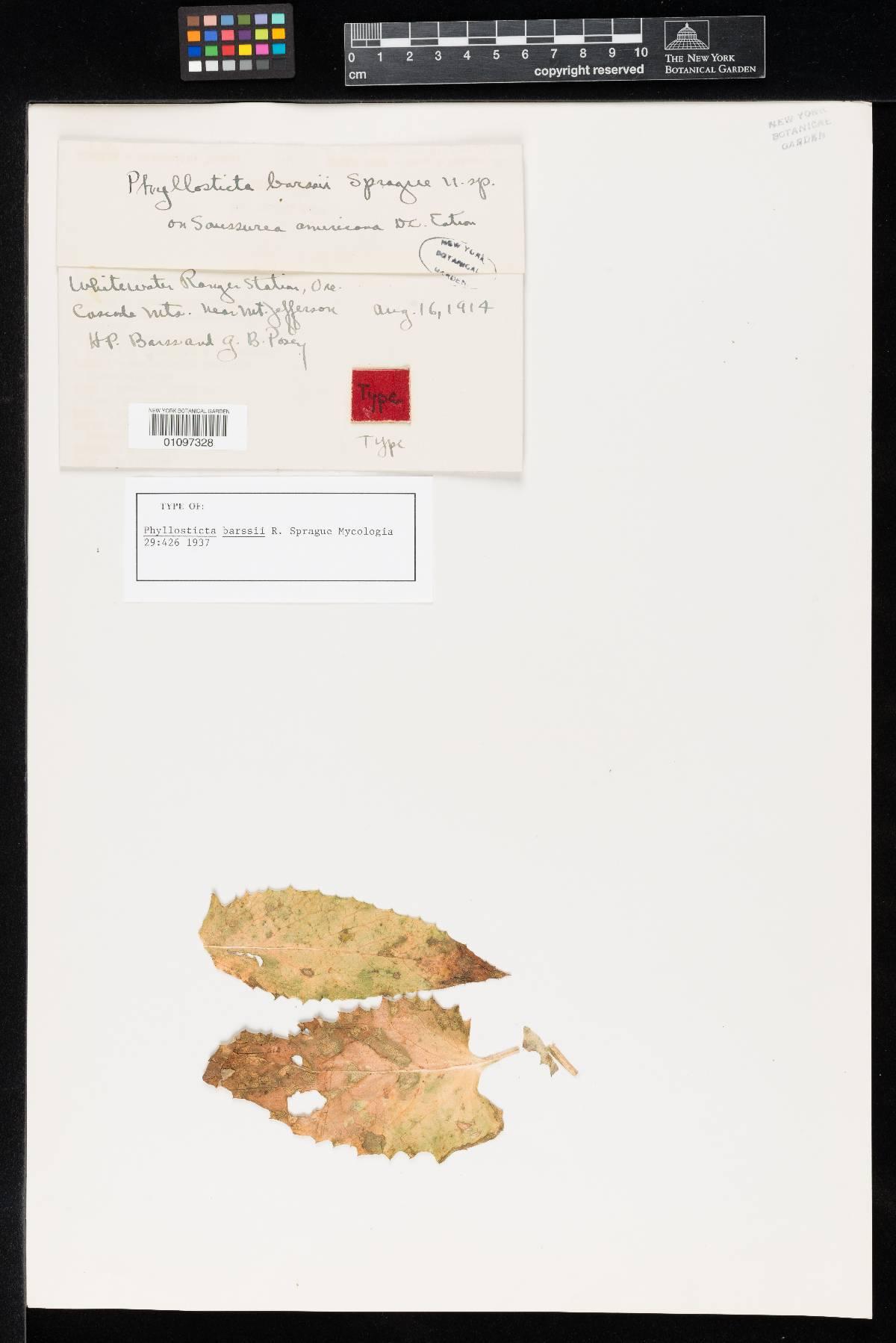 Phyllosticta barssii image