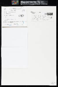 Ombrophila microsperma image