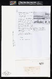 Pestalotiopsis tecomicola image