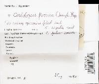 Coriolopsis floccosa image