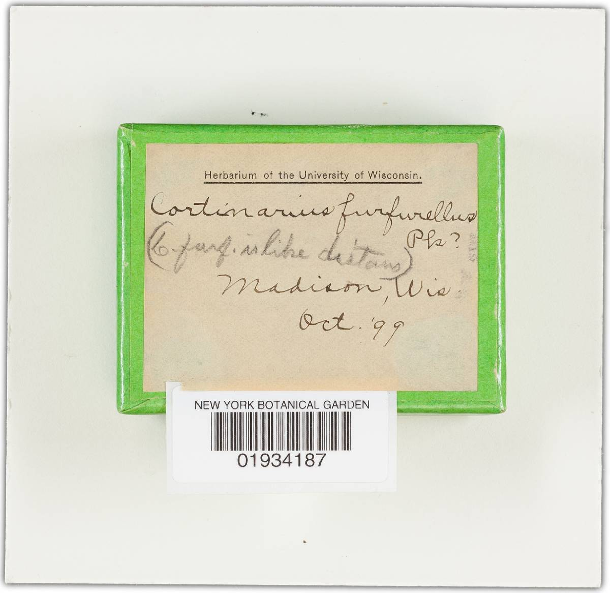 Cortinarius furfurellus image