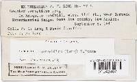 Geastrum xerophilum image