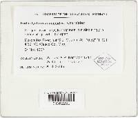 Chlorophyllum agaricoides image