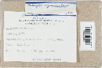 Clitocybe squamulosa image