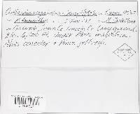 Image of Cortinarius macropus