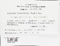 Oligoporus minusculoides image