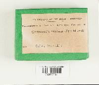Coriolopsis byrsina image
