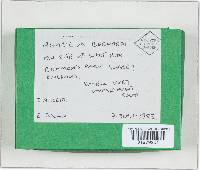 Agaricus bernardii image