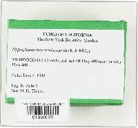 Hygrocybe russocoriacea image