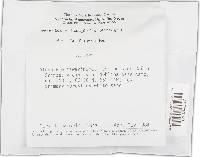 Cerrena sclerodepsis image