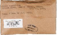 Peniophora carnosa image