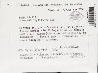 Hexagonia capillacea image