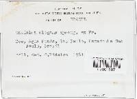 Lenzites elegans image
