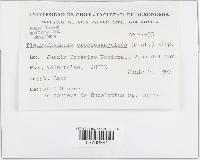 Image of Pleuroflammula croceosanguinea