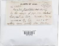 Pleurotus flabellatus image