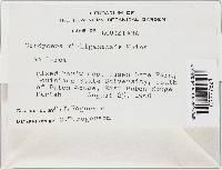 Cordyceps michiganensis image