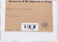 Image of Uncinula prosopidis