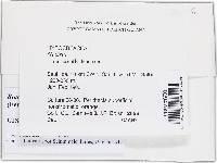 Bionectria grammicospora image