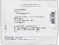 Image of Bionectria pseudochroleuca