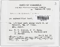 Calonectria kyotensis image
