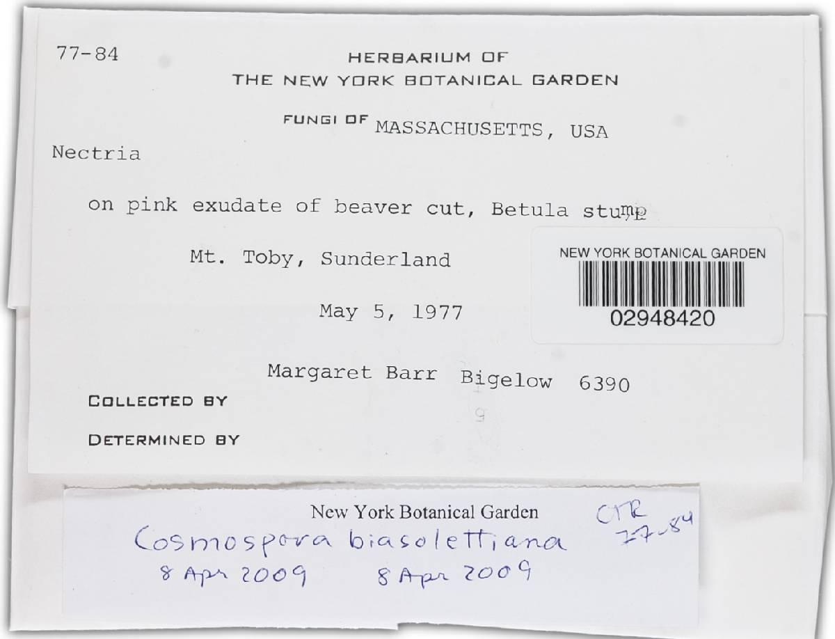 Cosmospora biasolettiana image
