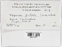 Hypocrea patella image