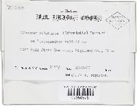 Hypocrea sulphurea image