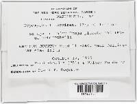 Hypomyces luteovirens image