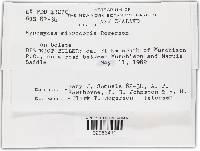 Hypomyces microspermus image