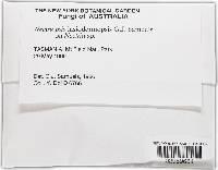 Image of Nectriopsis lasiodermopsis