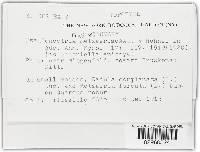 Image of Bryocentria metzgeriae