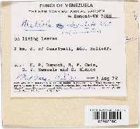 Meliola clavulata image