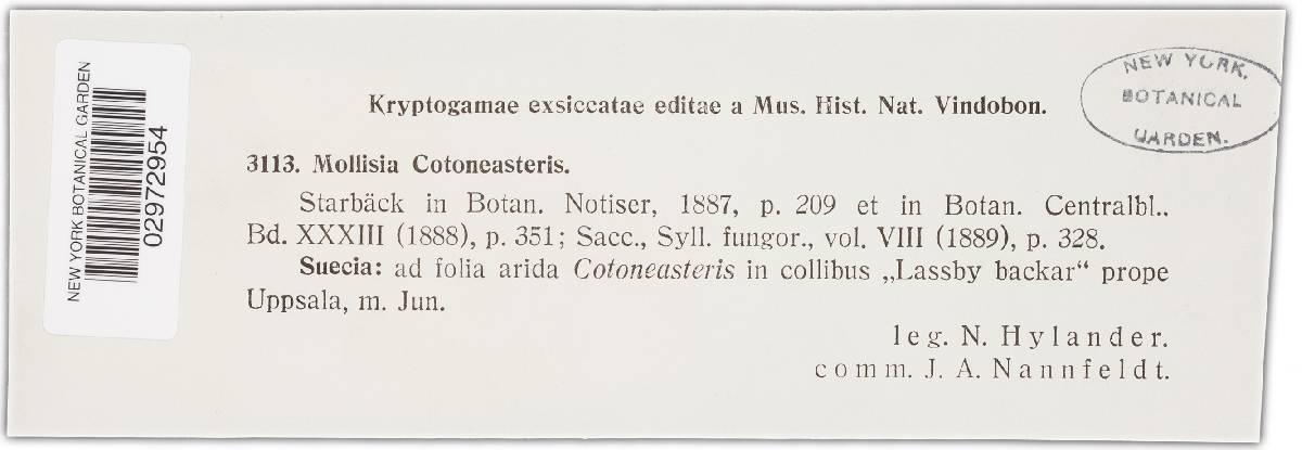 Mollisia cotoneastris image