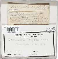 Scleroderris crypta image