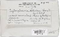 Leptosphaeria doliolum image