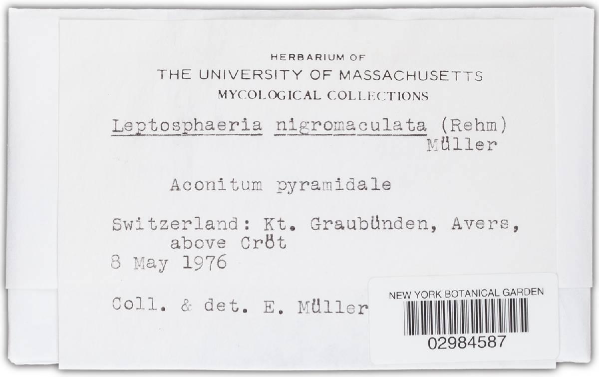 Leptosphaeria nigromaculata image