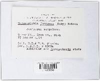 Herpotrichia juniperi image