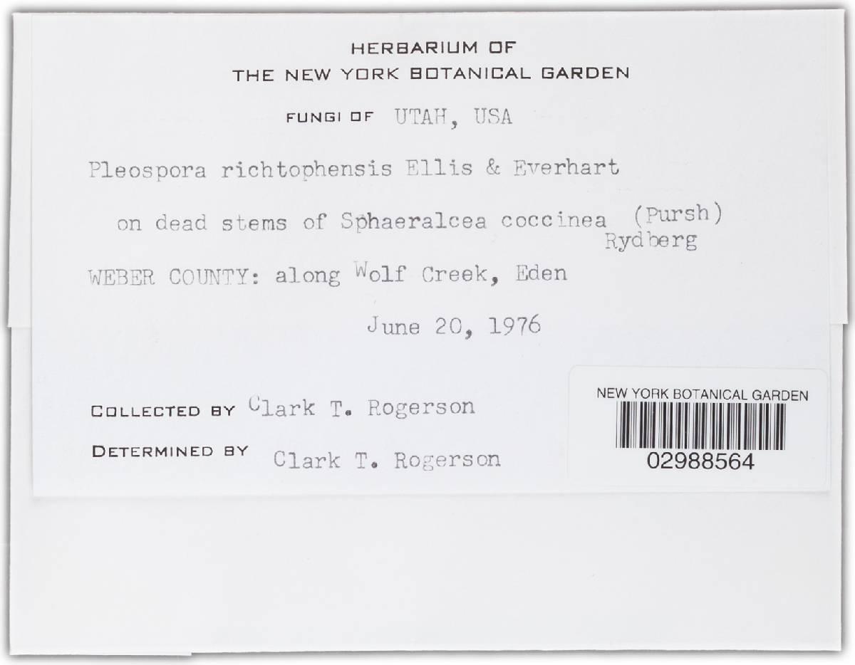 Pleospora richtophensis image