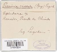 Image of Puccinia cristata