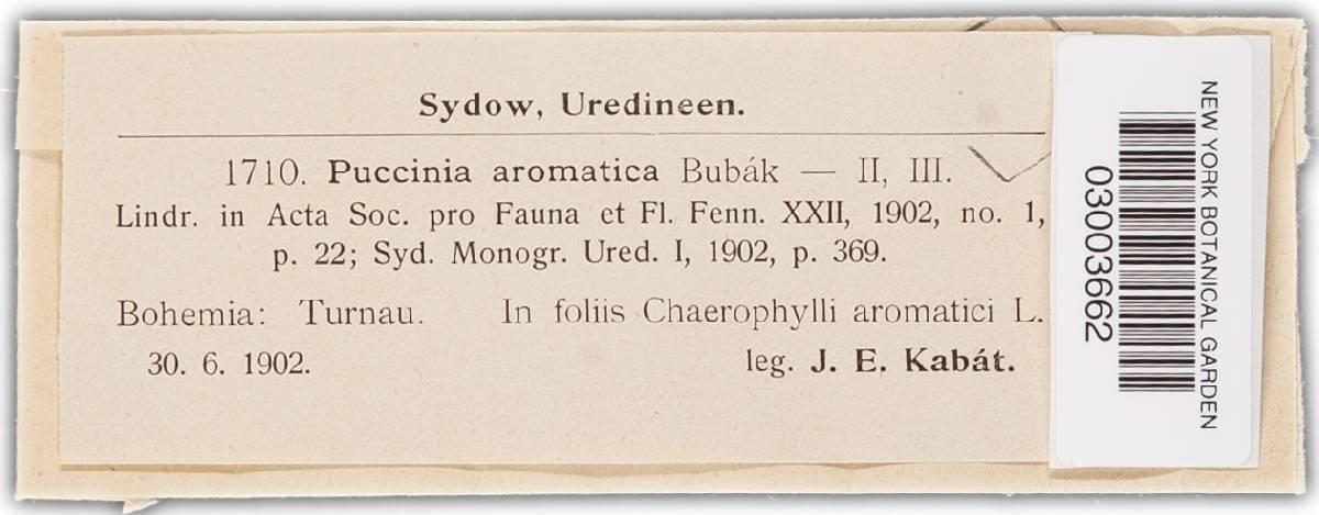 Puccinia aromatica image