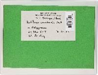Microbotryum emodensis image