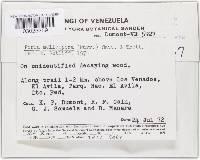 Image of Phellinus melleoporus
