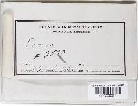 Phellinus viticola image